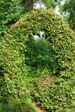 Groene boog van bladeren in park, Batumi Stock Afbeelding