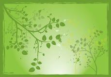 Groene boom Royalty-vrije Stock Fotografie