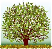 Groene boom stock illustratie