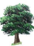 Groene boom Acrylverftekening royalty-vrije illustratie