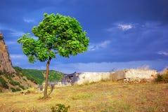 Groene boom in berg Royalty-vrije Stock Afbeelding