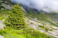 Groene boom bij Alpen royalty-vrije stock foto