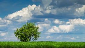 Groene boom in de zomer stock footage