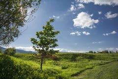 Groene boom en blauwe hemel stock foto's