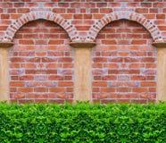Groene Boom met bakstenen muurachtergrond in park Stock Afbeelding