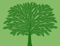 Groene boom op groene achtergrond stock illustratie