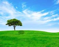 Groene boom op groene gras en hemel Royalty-vrije Stock Afbeelding