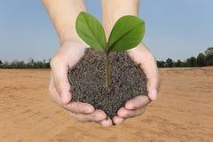 Groene boom ter plaatse op mensenhanden en plattelandsgebiedenachtergrond Stock Afbeeldingen
