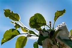 Groene boombladeren en blauwe hemel met achterlicht royalty-vrije stock afbeelding