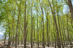 Groene boombossen stock foto's