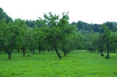 Groene boomgaard royalty-vrije stock foto