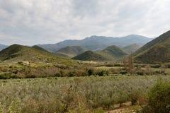 Groene boomgaardmening met bergen en humeurige wolken Stock Afbeeldingen