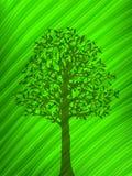 Groene boomschaduw over een groot blad Stock Foto