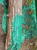 Groene boomstam stock foto