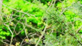 Groene boomtak stock videobeelden