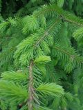 Groene boomtakken in foresr Royalty-vrije Stock Foto's