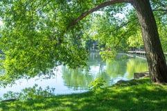 Groene boomtakken over het meer Stock Afbeeldingen