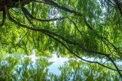 Groene boomtakken over het meer Royalty-vrije Stock Afbeelding
