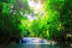 Groene bos de bochtenstroom van de waterval Stock Foto