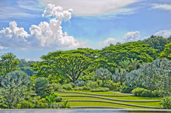Groene bos en gebieden Royalty-vrije Stock Afbeelding