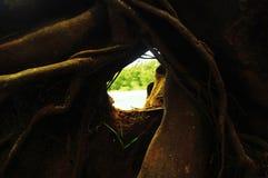 Groene bos en meervlucht in Dieng-plateau Java, Indonesië royalty-vrije stock fotografie