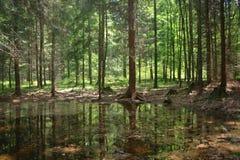Groene bos en rivier royalty-vrije stock afbeeldingen