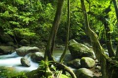 Groene bos en stroom Royalty-vrije Stock Foto