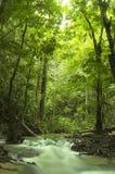 Groene bos en stroom Stock Afbeeldingen