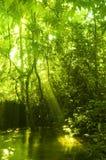 Groene bos en stroom Royalty-vrije Stock Fotografie