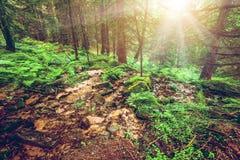 Groene bos vroege ochtend stock foto's