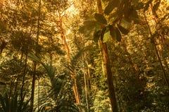 Groene bosachtergrond stock foto