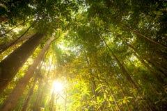 Groene bosachtergrond royalty-vrije stock foto
