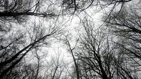 Groene bosbomen, boomhout, bomensilhouet, aardachtergrond stock video