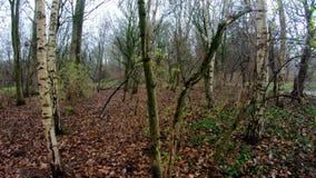 Groene bosbomen; boomhout, het Mooie bos lopen stock video