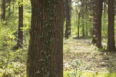 Groene bosdetails in de lente Stock Afbeelding