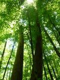 Groene bostreetops Stock Foto