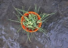 Groene bovenkanten van knoflook op een kom stock afbeelding