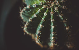 Groene Cactus Stock Afbeeldingen