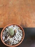Groene Cactus Royalty-vrije Stock Foto