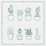 Groene cactus in een potten vectorillustraties stock illustratie