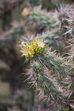 Groene cactus met gele uiteinden stock afbeeldingen