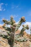 Groene cactus met gele uiteinden royalty-vrije stock afbeeldingen