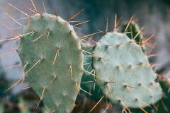 Groene cactus met weerhaken stock foto's