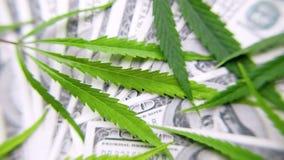 Groene cannabisbladeren, marihuana op de achtergrond van honderd Amerikaanse dollars geld Hennep, ganjablad Bedrijfsconcept, mari stock fotografie