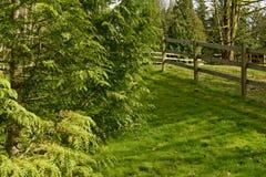 Groene ceder en esdoornbomen   stock foto's