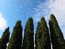 Groene cipresbomen Royalty-vrije Stock Afbeelding