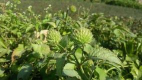 groene colur Royalty-vrije Stock Foto