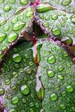 Groene dauw natte bladeren Stock Afbeelding