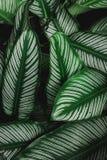 Groene de aard donkergroene achtergrond van het bladpatroon Royalty-vrije Stock Foto's