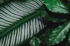 Groene de aard donkergroene achtergrond van het bladpatroon Royalty-vrije Stock Foto